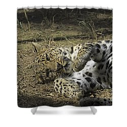 Purrfectly Content Shower Curtain by Anne Rodkin