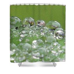 Morning Drops Shower Curtain by Kim Tran
