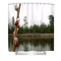 Shower Curtain featuring the photograph Pussy Willow Buds by Kent Lorentzen