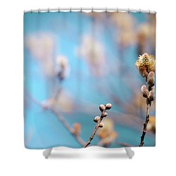 Pussy Willow Shower Curtain by Bulik Elena