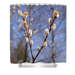 Pussy Willow Shower Curtain by Erin Paul Donovan