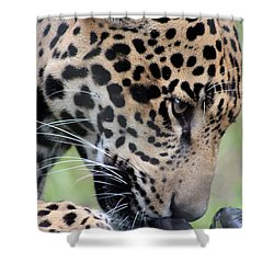 Jaguar And Toy Shower Curtain