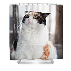 Shower Curtain featuring the photograph Puzzled by Laura Melis