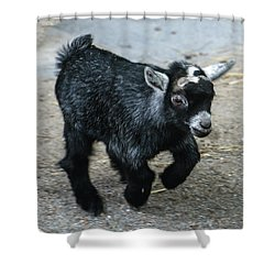 Pygmy Goat Kid Shower Curtain