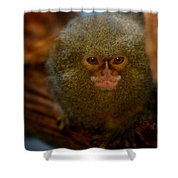 Pygmy Marmoset Shower Curtain by Anthony Jones