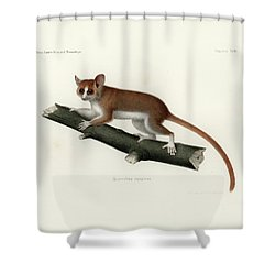 Pygmy Mouse Lemur Shower Curtain