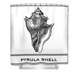 Pyrula Shell Shower Curtain