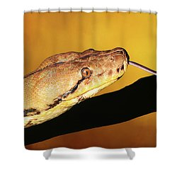 Python Shower Curtain by Donna Kennedy