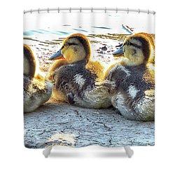 Quacklings Shower Curtain