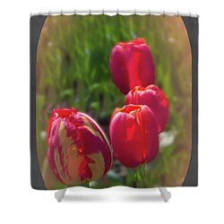 Quad Tulips Shower Curtain