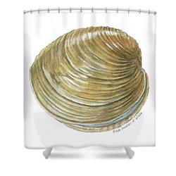 Quahog Shell Shower Curtain