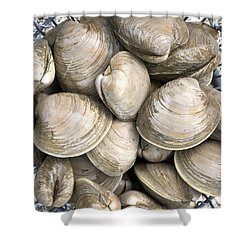 Quahogs Shower Curtain by Charles Harden