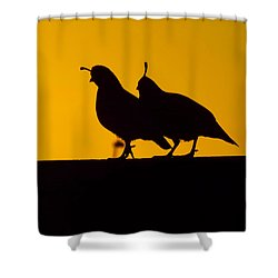 Quail At Sunset Shower Curtain