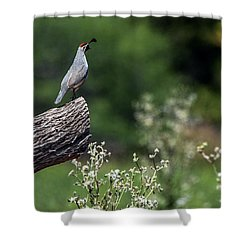 Quail Watching Shower Curtain by Tam Ryan
