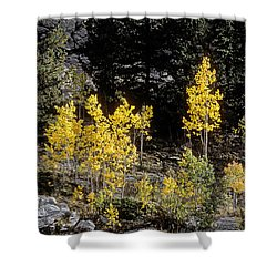 Aspens In Fall At Eleven Mile Canyon, Colorado Shower Curtain