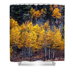 Aspen In Fall Colors In Eleven Mile Canyon Colorado Shower Curtain by John Brink