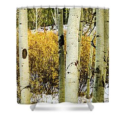 Quakies And Willows In Autumn Shower Curtain