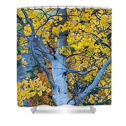 Shower Curtain featuring the photograph Quaking Aspen by Gary Lengyel