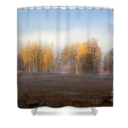 Quaking Aspen Trees At Dawn, Grand Teton National Park, Wyoming Shower Curtain
