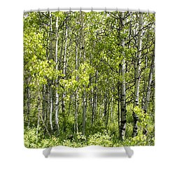 Quaking Aspens 2 Shower Curtain by Cynthia Powell