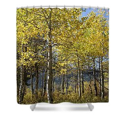 Quaking Aspens Shower Curtain by Cynthia Powell