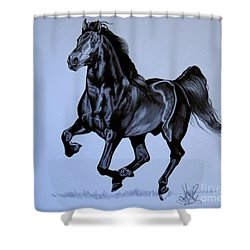 The Black Quarter Horse In Bic Pen Shower Curtain