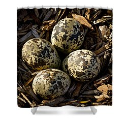 Quartet Of Killdeer Eggs By Jean Noren Shower Curtain by Jean Noren
