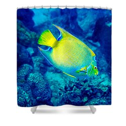 Queen Angelfish I Shower Curtain