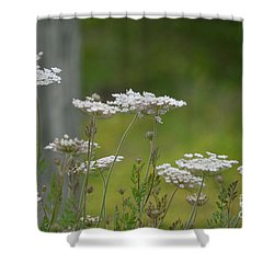 Queen Anne Lace Wildflowers Shower Curtain by Maria Urso