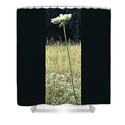 Queen Anne Shower Curtain