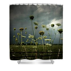 Queen Anne's Lace 3 Shower Curtain