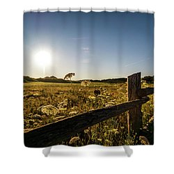 Queen Annes Lace Along Cavendish Fencerow Shower Curtain