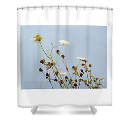 Queen Anne's Lace And Dried Clovers Shower Curtain by Lise Winne