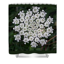 Shower Curtain featuring the photograph Queen Anne's Lace by Charles Robinson