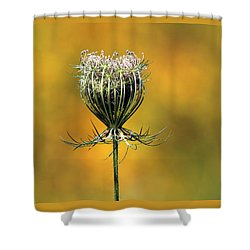 Queen Anne's Lace Stony Brook New York Shower Curtain by Bob Savage
