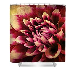Queen Dahlia Shower Curtain by Kathi Mirto