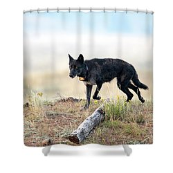 Queen Of Lamar Valley Shower Curtain