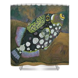 Queen Trigger Fish Shower Curtain by Susan  Spohn