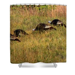 Quick Hide It's Thanksgiving Shower Curtain