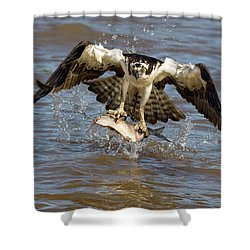 Quick Snatch Shower Curtain