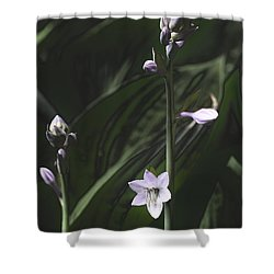 Quiet Life Shower Curtain