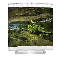 Quiet Trout Stream Shower Curtain