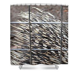 Quills Of An African Porcupine Shower Curtain by Linda Geiger