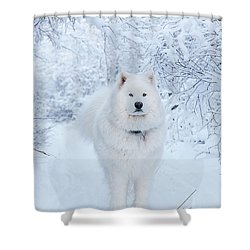 Quinn The Mighty Samoyed Shower Curtain