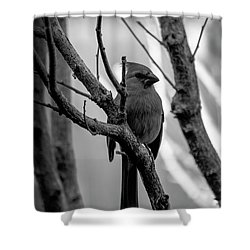 Quite Bird In The Tree Shower Curtain