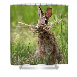 Rabbit Collector  Shower Curtain by Terry DeLuco