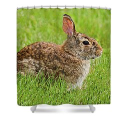 Rabbit In A Grassy Meadow Shower Curtain
