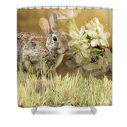 Eastern Cottontail Rabbit In Grass Shower Curtain by Janette Boyd