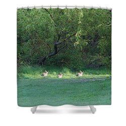 Rabbit Meadow Shower Curtain