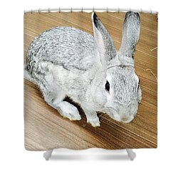 Rabbit Shower Curtain by Nao Yos